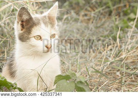 Homeless Kitten Sitting On The Ground.homeless Kitten Sitting On The Ground