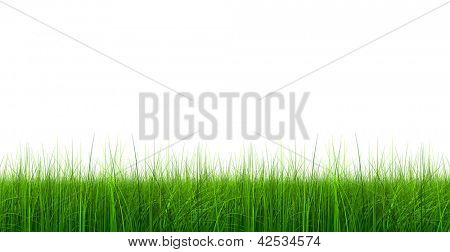 High resolution green,fresh and natural 3d grass field or lawn frame banner isolated on white background