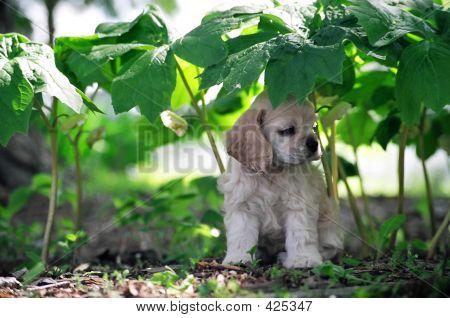 Acs Under Plants