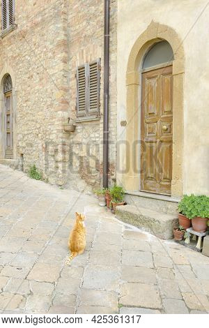 Ginger Cat Sits Outside Opposite The Old Front Door To The House