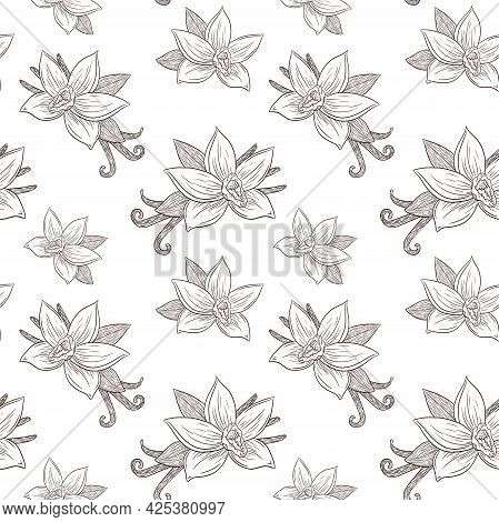 Engraved Vanilla Flowers And Pods Seamless Pattern Vintage Style Line Art For Background, Backdrop,