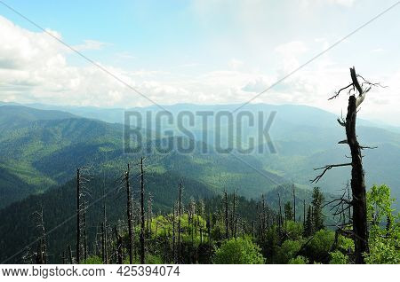 A Look Through The Old Tree Trunks To The Mountain Peaks Overgrown With Coniferous Forest.