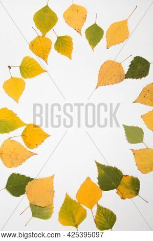 Autumn Flatlay Of Leaves On White Background With Place For Text