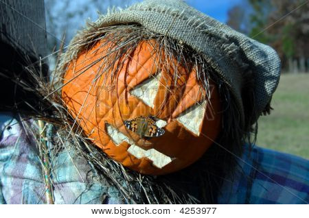 Carved pumpkin on scarecrow has a living nose ring in the form of a colorful Silvery Checkerspot moth. poster