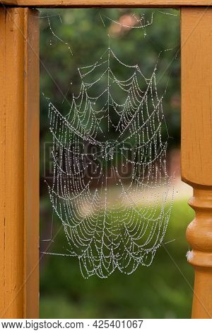 Close-up Of A Spider Web With Raindrops On A Green Background.   Cobweb Or Cobweb Natural Rain Patte