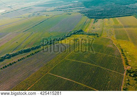 Italian Countryside Beautiful Farms And Vineyards Beautiful Aerial View. Vineyards, A Suggestive Aer