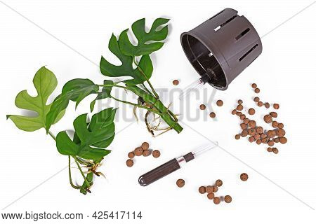 Tools For Keeping Houseplants In Passive Hydroponics System Without Soil With Water Level Indicators
