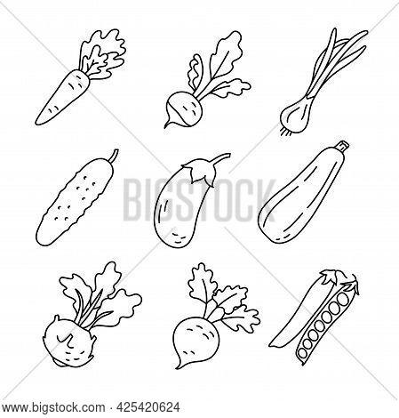 Vegetable Sketch. Carrot, Radish, Green Onion And Cucumber. Eggplant, Zucchini, Kohlrabi Cabbage, Be
