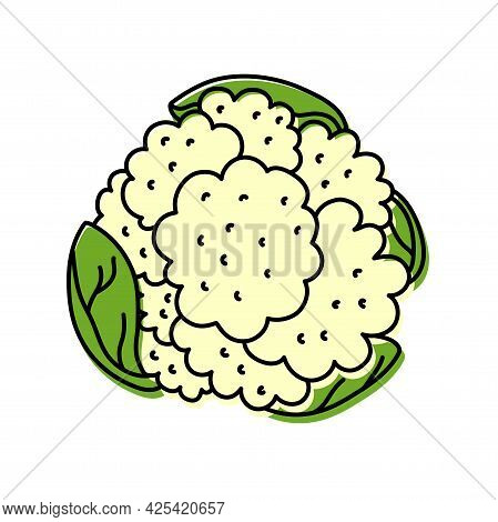 Cauliflower. Vegetable Sketch. Color Simple Icon. Hand Drawn Vector Doodle Illustration