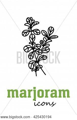 Sweet Marjoram Vector Icon. Vegetable Green Leaves. Greenery. Culinary Herb Spice For Cooking, Medic