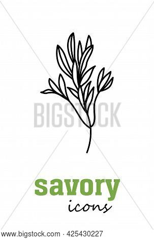 Savory Vector Icon. Vegetable Green Leaves. Greenery. Culinary Herb Spice For Cooking, Medical, Gard