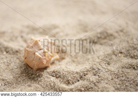 Conch Shell On Sany Beach, Summer Holidays Background