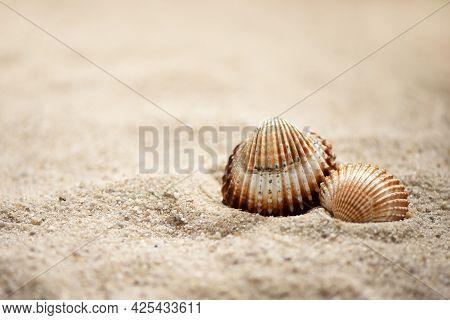 Two Rippled Seashells Lay On Sandy Beach, Summer Marine Background