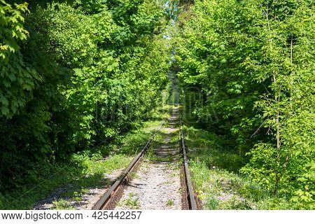 Railroad Tracks Passing Through Beautiful Thickets In A Forest Area
