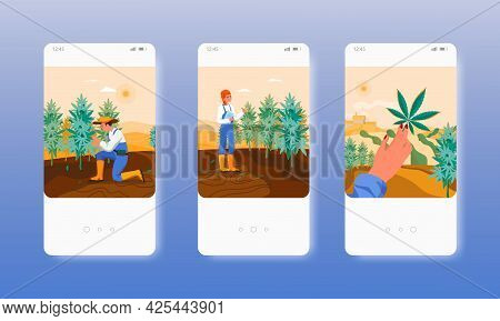 Hemp Farm. Cannabis Marijuana Plants Growing. Mobile App Screens, Vector Website Banner Template. Ui