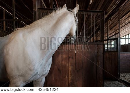 Thoughtful Horse Standing In Stable And Somewhere Looks Curiously. Rural Lifestyle.
