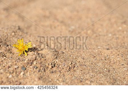 Dandelion On The Sand. Free Space For Text. Summer, Yellow Flower, Sand.