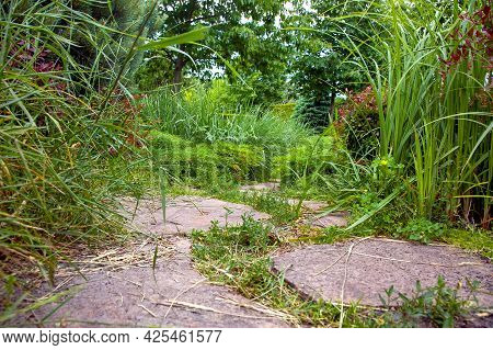 Rough Different Shapes Of Natural Stone Path Paved In Green Backyard Plants, Garden Walkway Landscap