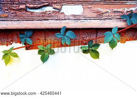 Shabby Paint. Autumn Leaves On A Background Of Old Wood. Natural Pattern