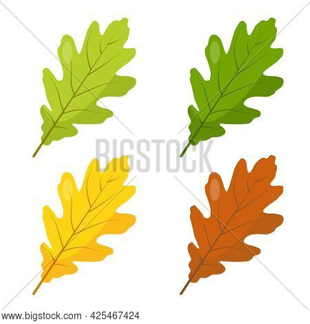 Multicolored Oak Leaves Icons Isolated On White Background. Green, Yellow And Brown Oak Leef. Vector