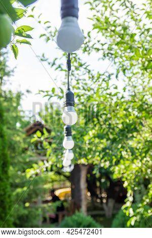 Light Bulb On Green Background, Light Bulb On The Tree, Light Bulb In The Garden