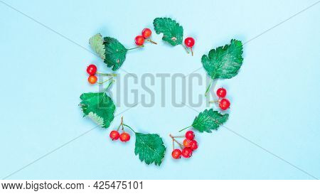 Autumn Composition. Frame Made Of Green Dried Leaves, Red Fruits Rowans Isolated On Pastel Blue Back