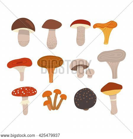 Edible Mushrooms Set With Poisonous Fly Agaric. Different Types Of Mushrooms, Such As Champignons, C