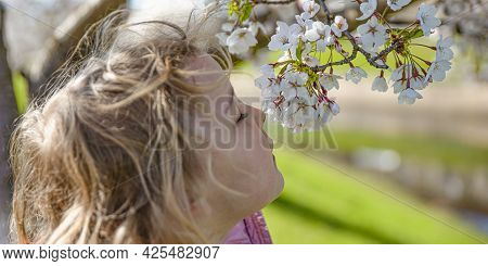 Cherry Blossoms. The Girl Enjoys The Scent Of Japanese Cherry Blossoms. Cherry Blossom In Japan In S