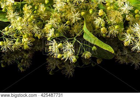 Lots Of Linden Flowers And Leaves On An Isolated Black Background. Medicinal Plants Commonly Make Te