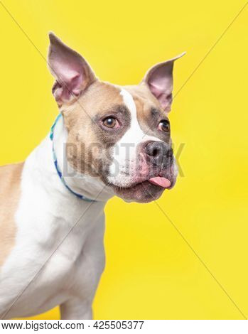 studio shot of a cute dog in front of an isolated background