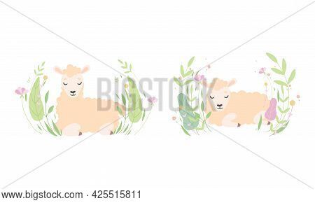 Cute Sheep Lying In Flowers Set, Lovely Little Fluffy Lamb Farm Animal In Pastel Colors Cartoon Vect
