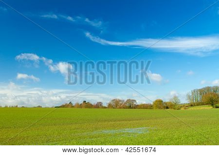 Green Field In English Countryside
