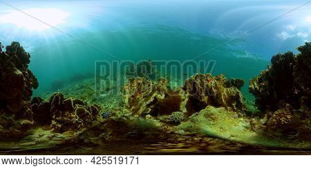 Tropical Coral Reef Seascape With Fishes, Hard And Soft Corals. Underwater Video. Philippines. 360 P