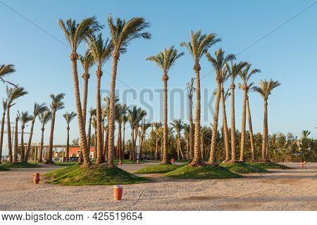Sharm El Sheikh, Egypt - June 3, 2021: View On Palm Trees At A Beach Of Hotel Albatros Laguna Vista