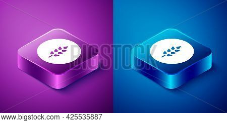 Isometric Cereals Set With Rice, Wheat, Corn, Oats, Rye, Barley Icon Isolated On Blue And Purple Bac