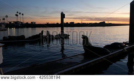 Sea Lion Rookery, Pier In Harbor Village, Marina Of Oceanside, Usa. Wild Marine Animal Resting, Cali