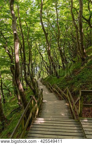 A Vertical View Of A Long Wooden Boardwalk And Stairs Leading Down To The Ocean In Lush Green Forest