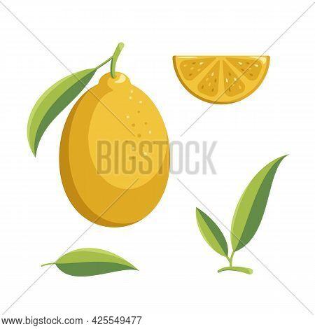 Lemon Collection. Fresh Whole Lemon, Lemon Slice And Leaf Lemon Isolated On White Background