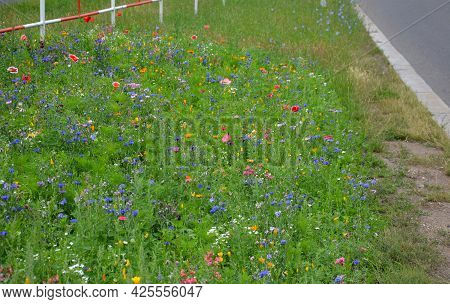 Meadow Sown Between Roads. It Is A Mixture Of Low Annuals, Covering More Than 25 Species. The Mixtur