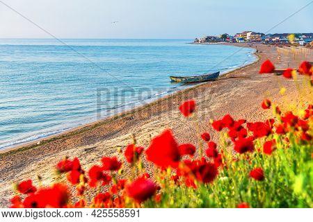Vama Veche, Black Sea - Romania. Beautiful Field Of Red Poppies In The Sunrise.