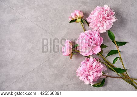 Pink Peonies On Grey Background, Copy Space. Top View