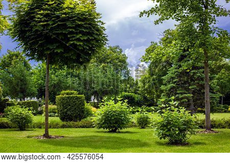 City Park With Garden Landscape With Trees And Bushes On A Lawn With Green Grass On A Sunny Day With