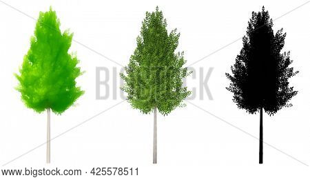 Set or collection of Eagleston Savannah Holly trees, painted, natural and as a black silhouette on white background. Concept or conceptual 3d illustration for nature, ecology and conservation, strengt