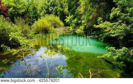 Enchanted Green Forest Corner With River With Reflections In The Water.