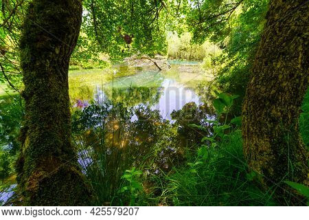 Enchanted Forest With Green Plants And River With Reflections.