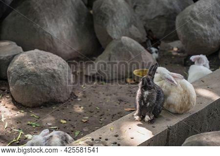 Close Up Cutie Rabbit In Wat Pra Putthabat Phu Kwai Ngoen At Chiang Khan District Loei Thailand.chia