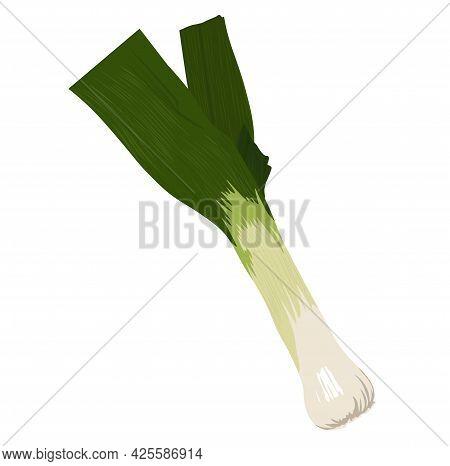 Leek Vector Stock Illustration. Green Onion Stalks. Organic Food, Vegetable. Salad Dressing. Isolate