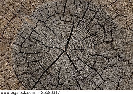 Close Up Gray Background Texture Of Old Weathered Tree Trunk Cross Section With Wood Splits And Annu