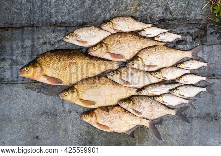 A Fish Catch Laid Out In A School On A Gray Metal Surface. Bream And Roach Are Available In Various