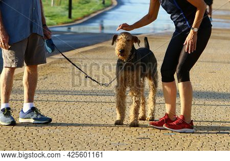 A Dog For A Walk In A City Park On The Mediterranean Sea In Israel